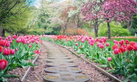Tavaszi magvetés